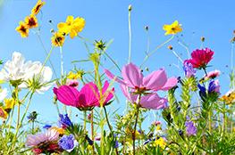 Bild einer bunten Blumenwiese