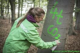 Eine Greenpeace-Aktivistin sprüht einen Baum an