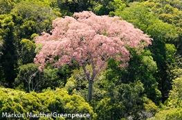 Ein rosa Baum im Regenwald