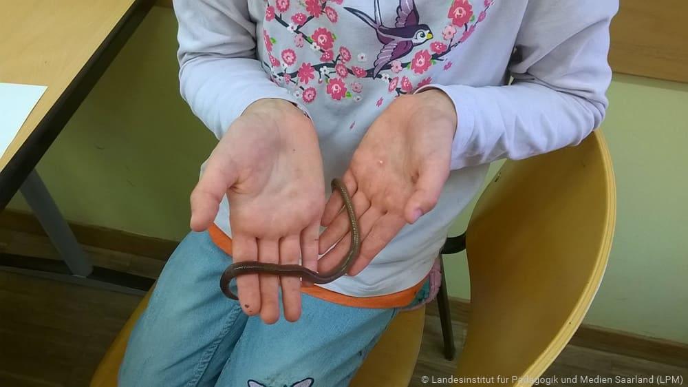 Ein Mädchen hält einen Regenwurm in den Händen
