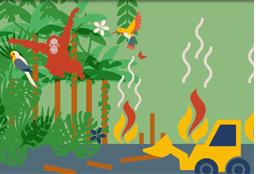 Thema Palmöl verständlich aufbereitet - Lehrer-Online