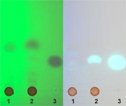 Dünnschichtchromatographie zur Analyse verschiedener Zimtsorten