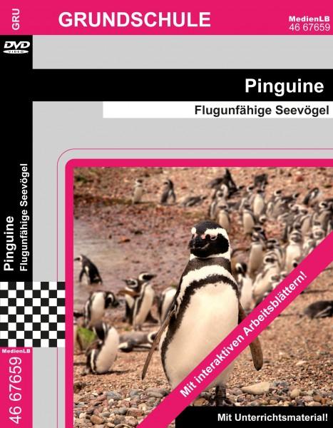 Pinguine - Flugunfähige Seevögel
