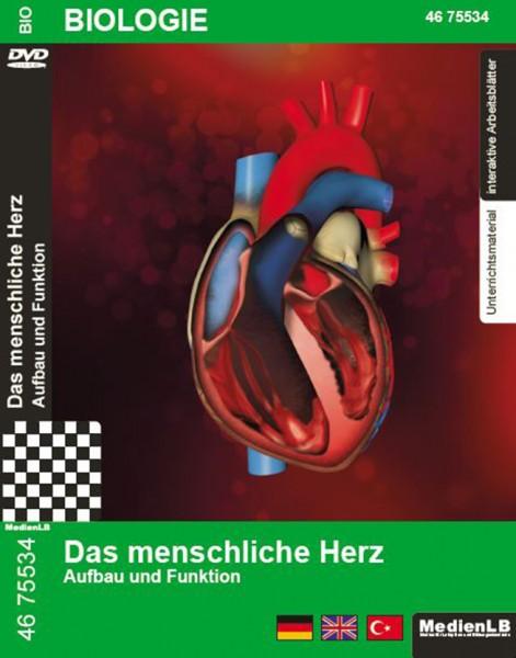 Das menschliche Herz - Aufbau und Funktion