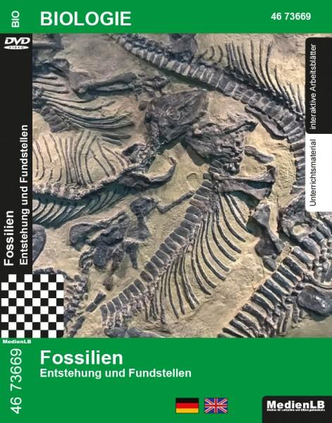 Fossilien - Entstehung und Fundstellen