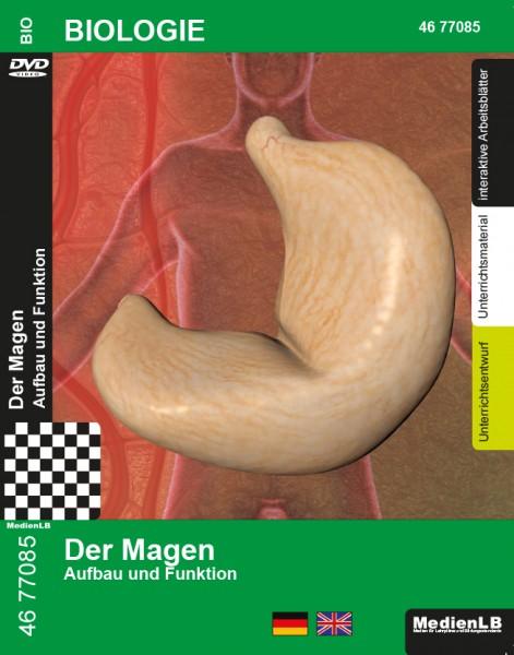 Der Magen - Aufbau und Funktion
