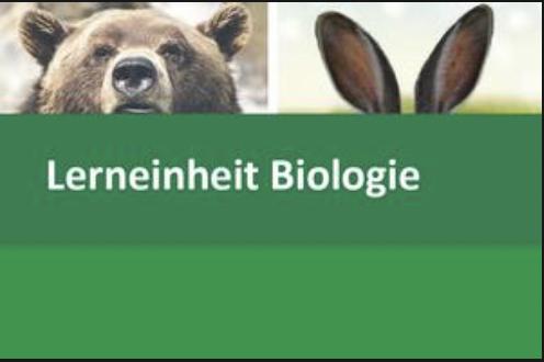 Interaktive Lerneinheit Biologie 5 – Das Ohr