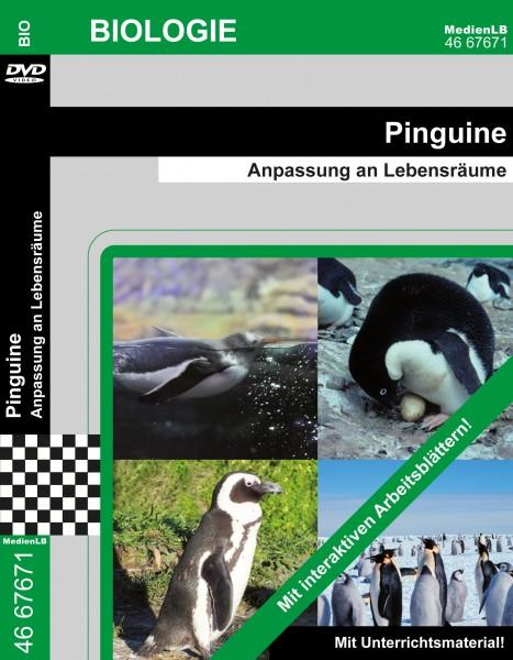 Pinguine - Anpassung an Lebensräume