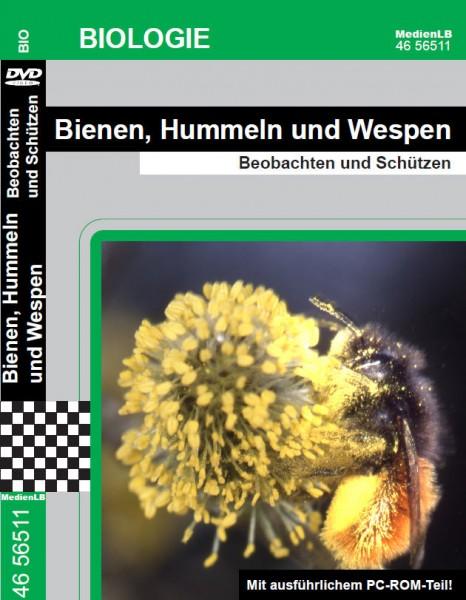Bienen, Hummeln und Wespen - Beobachten und Schützen