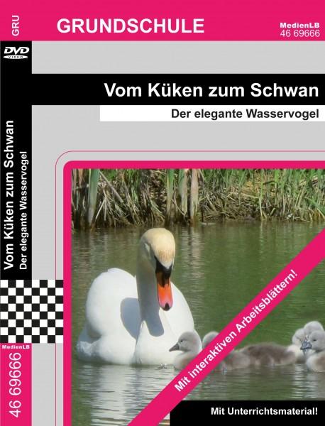 Vom Küken zum Schwan - Der elegante Wasservogel