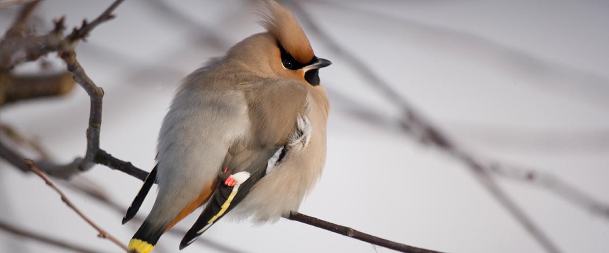 Vögel am Futterhaus - Fütterung im Winter