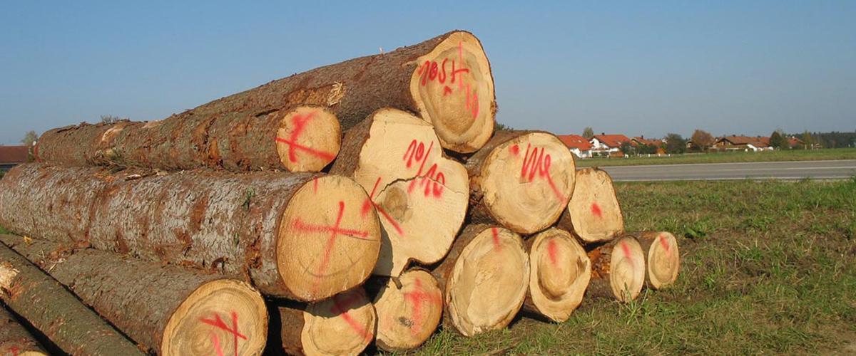 Holz/ Papier/ Recycling - Umwelterziehung