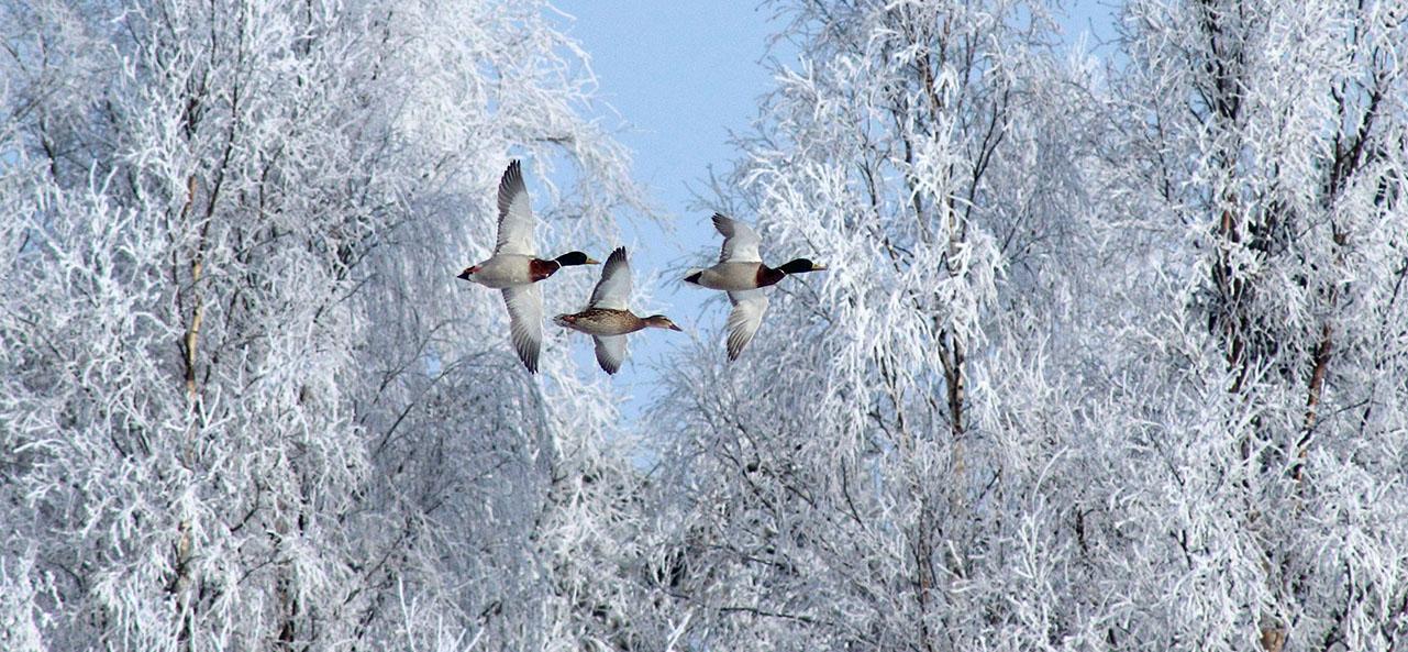 Tiere im Winter - Zugvögel, Winterschläfer und Winteraktive