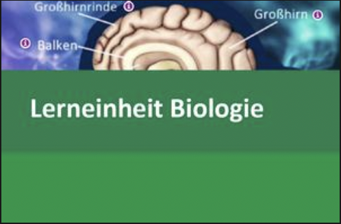 Interaktive Lerneinheit Biologie 9 – Das Gehirn