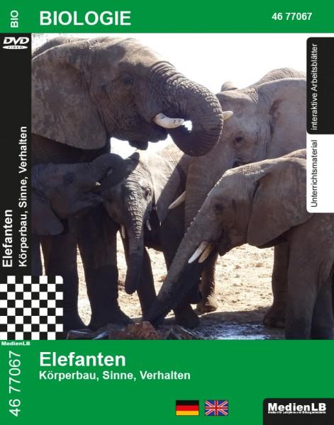 Elefanten - Körperbau, Sinne, Verhalten