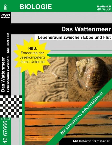 Das Wattenmeer - Lebensraum zwischen Ebbe und Flut