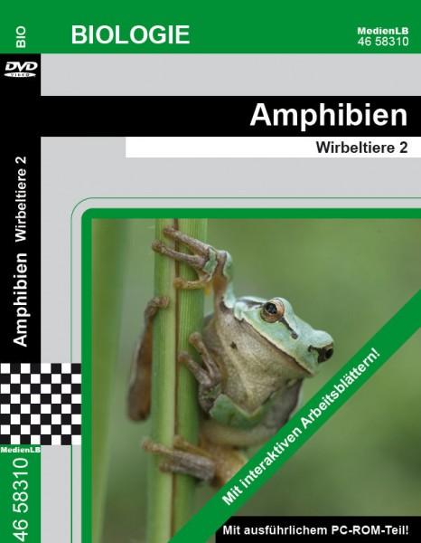 Amphibien - Wirbeltiere 2