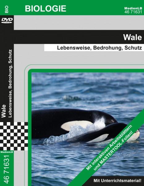 Wale - Lebensweise, Bedrohung, Schutz