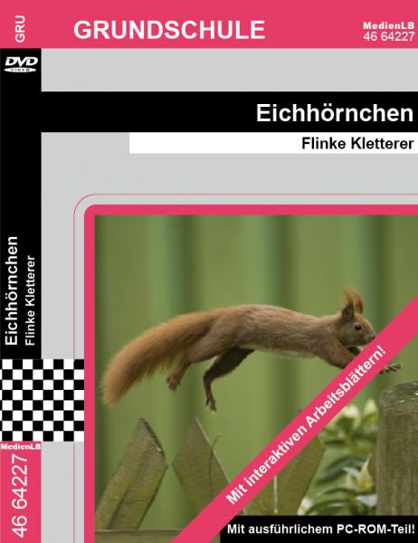 Eichhörnchen - Flinke Kletterer