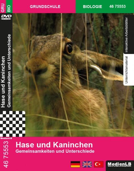 Hase und Kaninchen - Gemeinsamkeiten und Unterschiede
