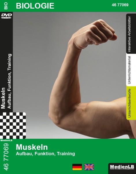 Muskeln - Aufbau, Funktion, Training