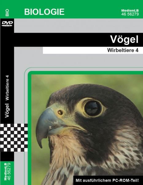 Vögel - Wirbeltiere 4