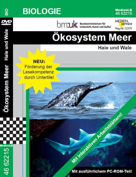 Ökosystem Meer - Haie und Wale