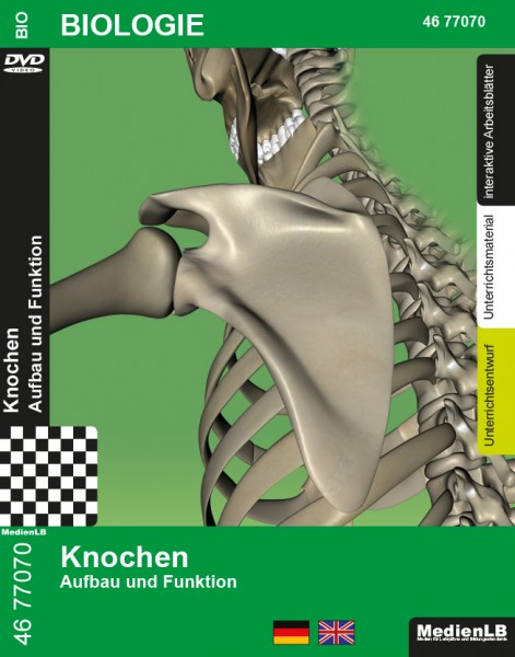 Knochen - Aufbau und Funktion