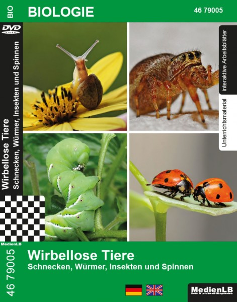 Wirbellose Tiere - Schnecken, Würmer, Insekten und Spinnen