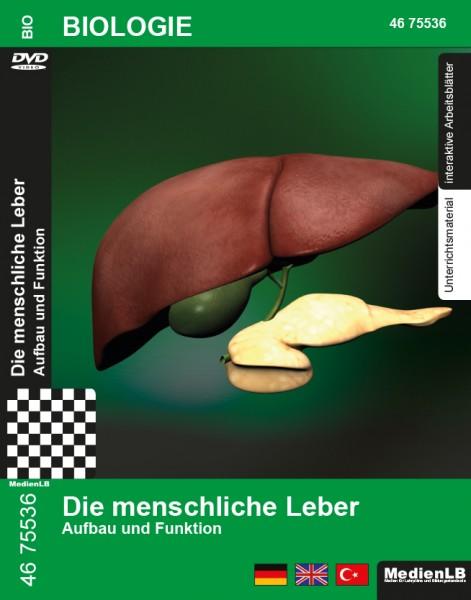 Die menschliche Leber - Aufbau und Funktion