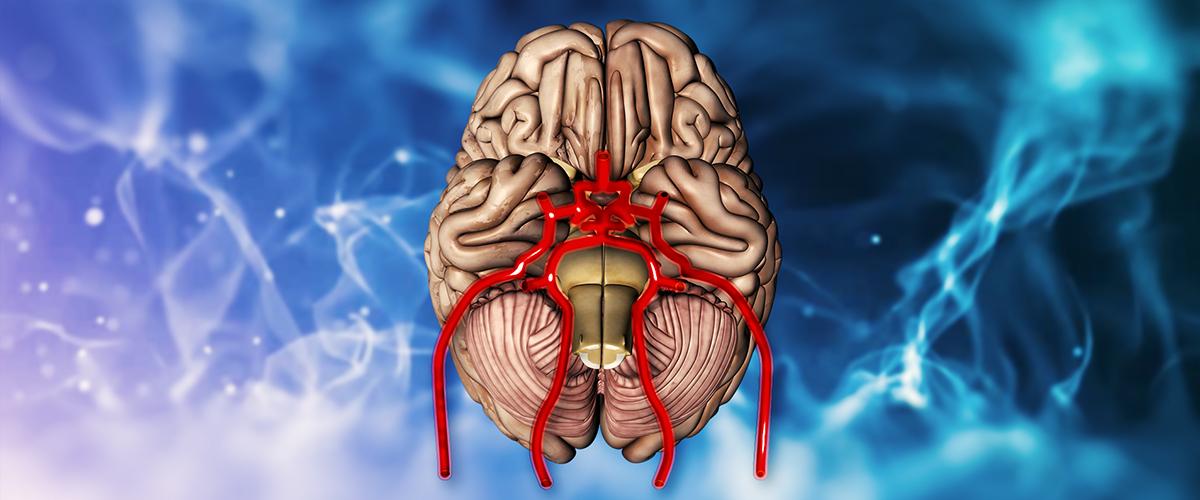 Das menschliche Gehirn - Aufbau und Funktion